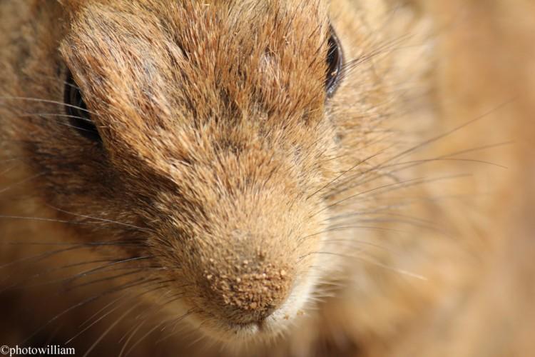 Wallpapers Animals Rodents - Misc écureuil