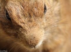 Fonds d'écran Animaux écureuil