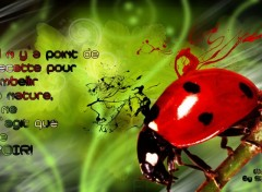 Wallpapers Digital Art Coccinelle