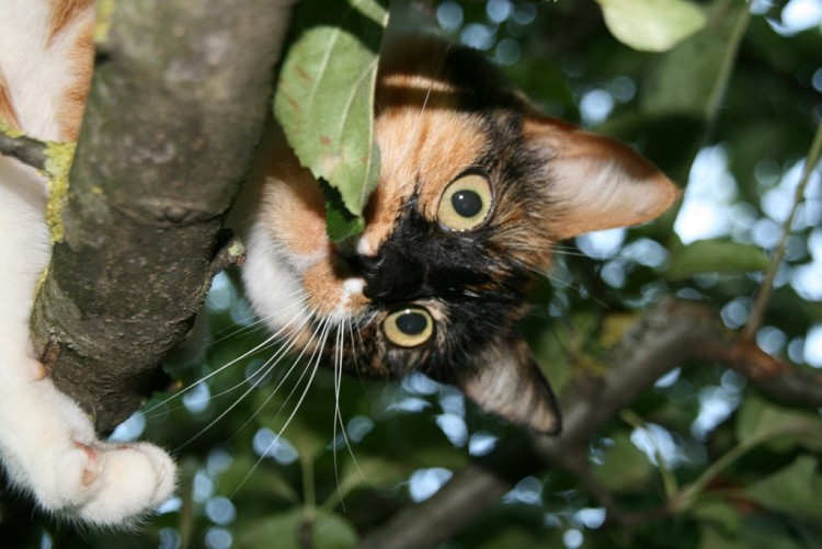 Wallpapers Animals Cats - Kittens Maya n'est pas une abeille