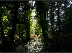 Fonds d'écran Nature Lumière Verte