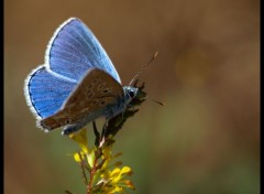 Wallpapers Animals Papillon Bleu