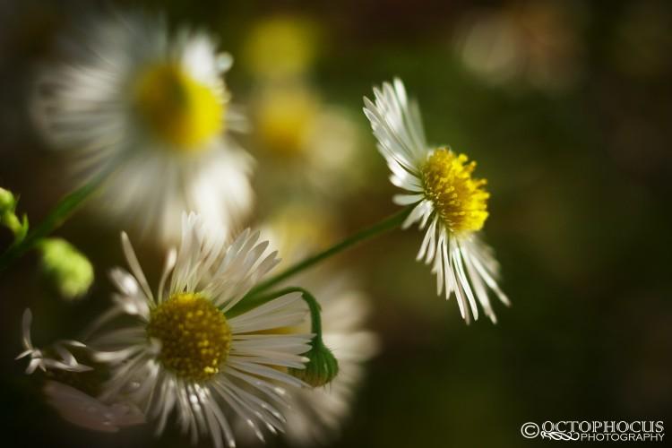 Fonds d'écran Nature Fleurs Wallpaper N°285959