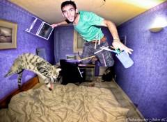 Fonds d'écran Humour Le chat qui rend fou
