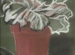 Fonds d'écran Art - Crayon Le chou