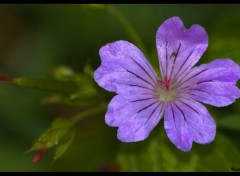 Wallpapers Nature Fleur...
