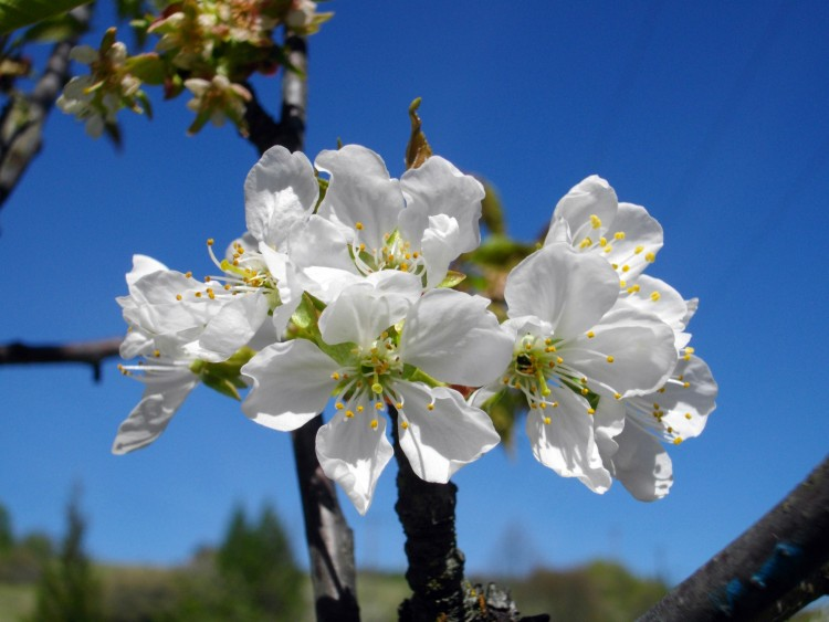 Fonds d'écran Nature Fleurs Wallpaper N°286649