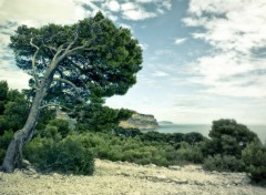Fonds d'écran Nature Calanque de Marseille