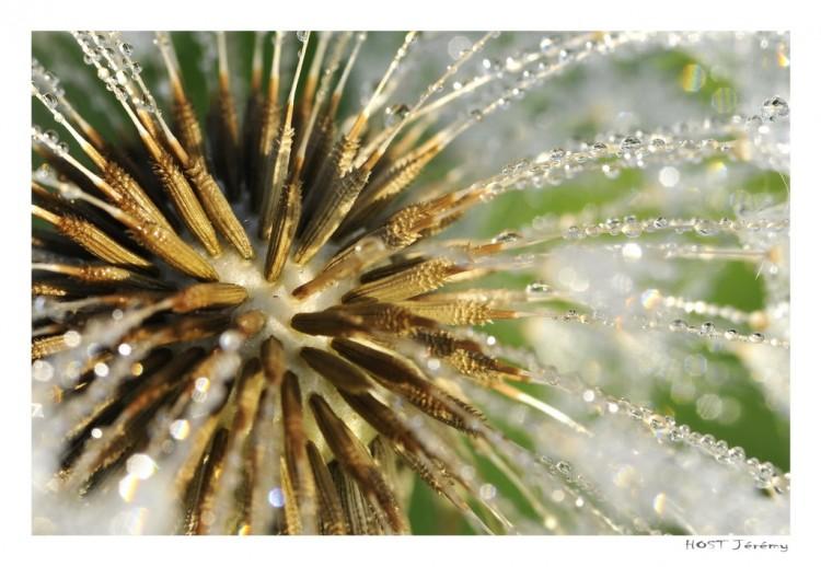 Fonds d'écran Nature Fleurs Macro fleur .2