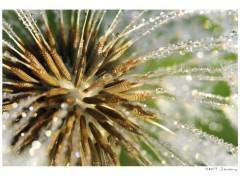 Fonds d'écran Nature Macro fleur .2