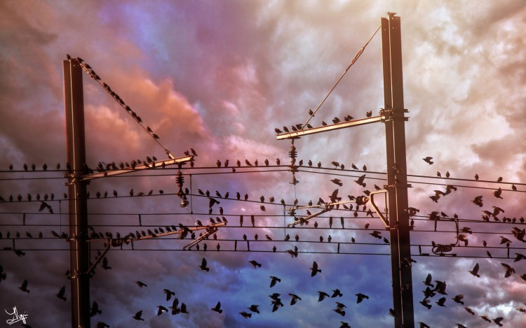 Wallpapers Animals Birds - Misc Habitants du ciel