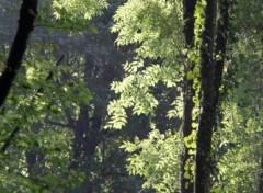 Fonds d'écran Nature Image sans titre N°287374