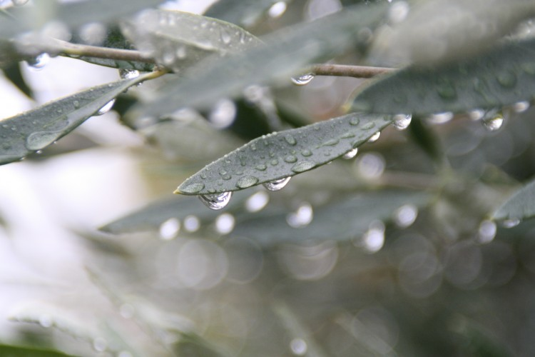 Wallpapers Nature Water - Drops pluie