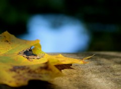 Wallpapers Nature feuille d'automne