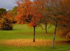 Fonds d'écran Nature tombez les feuilles
