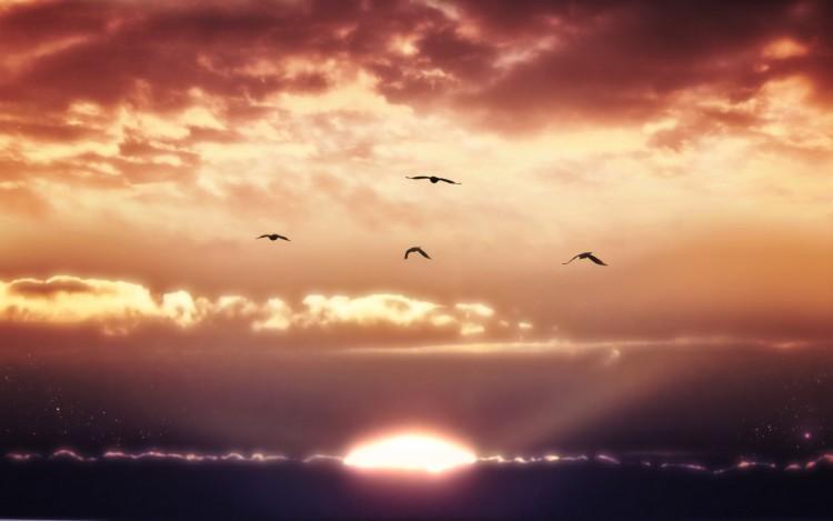 Fonds d'écran Nature Couchers et levers de Soleil Liberté