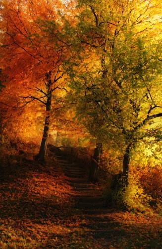 Fonds d'écran Art - Numérique Nature - Divers Impressions d'automne.