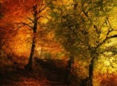 Wallpapers Digital Art Impressions d'automne.