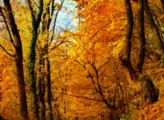 Wallpapers Nature Impressions d'automne 5.