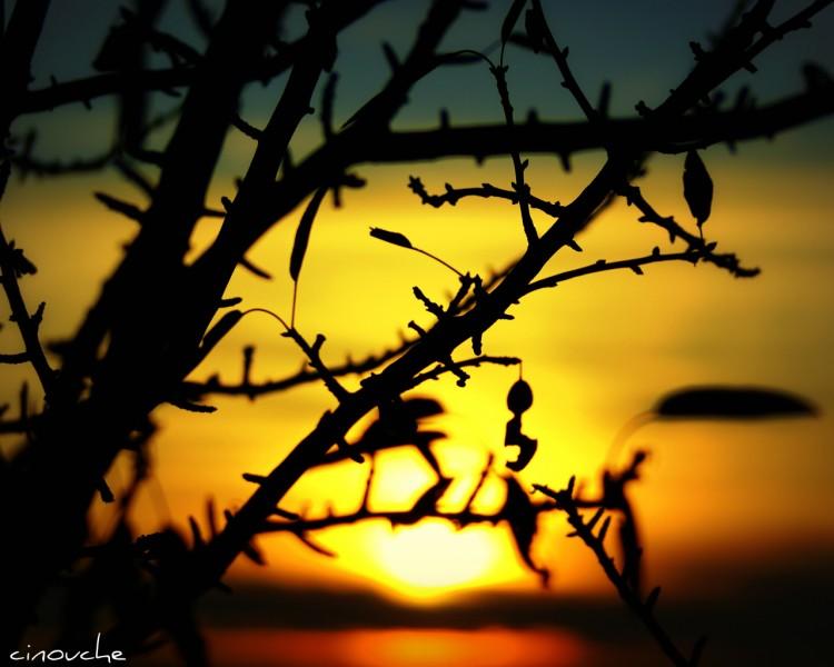 Fonds d'écran Nature Couchers et levers de Soleil behind trees