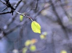 Fonds d'écran Nature Petite feuille