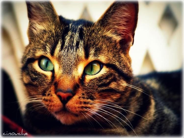 Wallpapers Animals Cats - Kittens Wallpaper N°288724