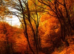Wallpapers Digital Art Impressions d'automne 7b.
