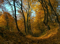 Wallpapers Nature Impressions d'automne 9.