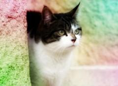 Fonds d'écran Animaux chat