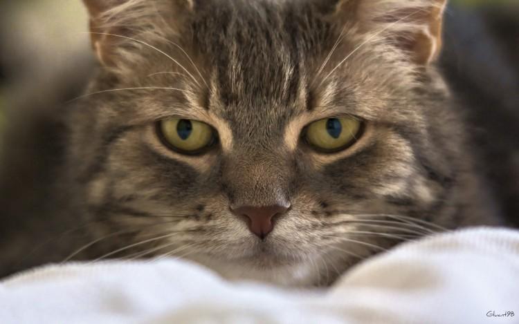 Wallpapers Animals Cats - Kittens Predator !!!
