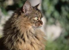 Fonds d'écran Animaux Portrait de chat