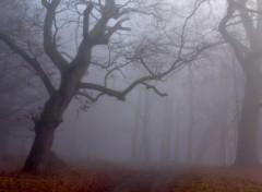 Wallpapers Nature Un épais brouillard .1.