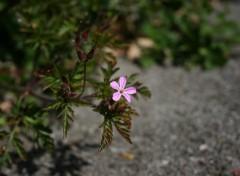 Fonds d'écran Nature Fleurs mauve