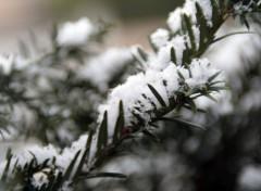 Fonds d'écran Nature L'hiver