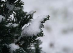 Fonds d'écran Nature neige