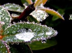 Fonds d'écran Nature Goutte d'eau sur gel