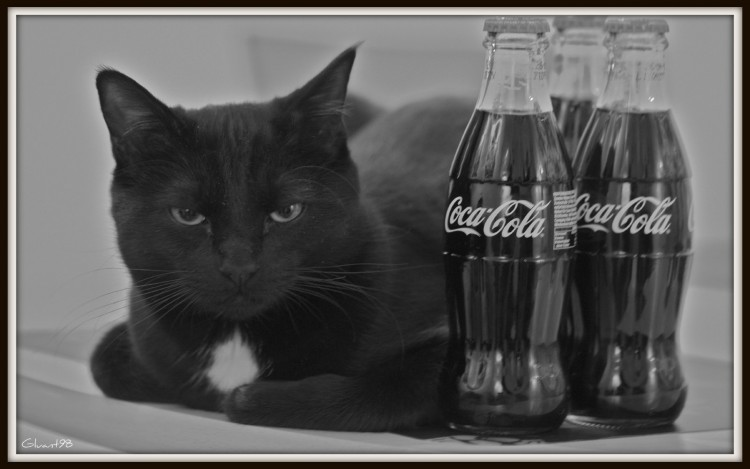 Fonds d'écran Animaux Chats - Chatons Coke & Cat