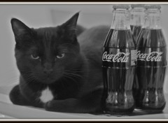 Fonds d'écran Animaux Coke & Cat