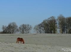 Fonds d'écran Nature Ciel bleu, -5° en Picardie/Oise