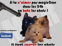 Fonds d'écran Grandes marques et publicité Save cat