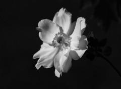 Fonds d'écran Nature Dark Beauty