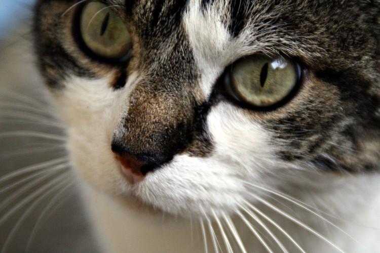 Wallpapers Animals Cats - Kittens Jolie petit' frimousse