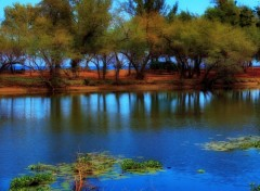 Wallpapers Trips : Africa Trees in the water...