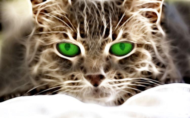 Fonds d'écran Animaux Chats - Chatons Néon cat