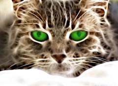 Animals Néon cat