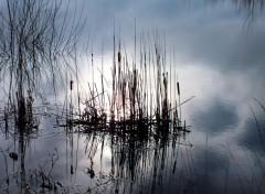 Nature reflet