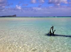 Nature L'île plate