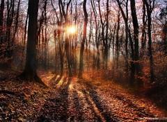 Nature Le mystère des forêts d'ambre