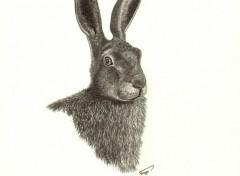 Art - Crayon Portrait Lièvre