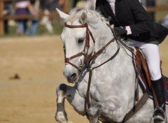 Animaux Horse Attitude